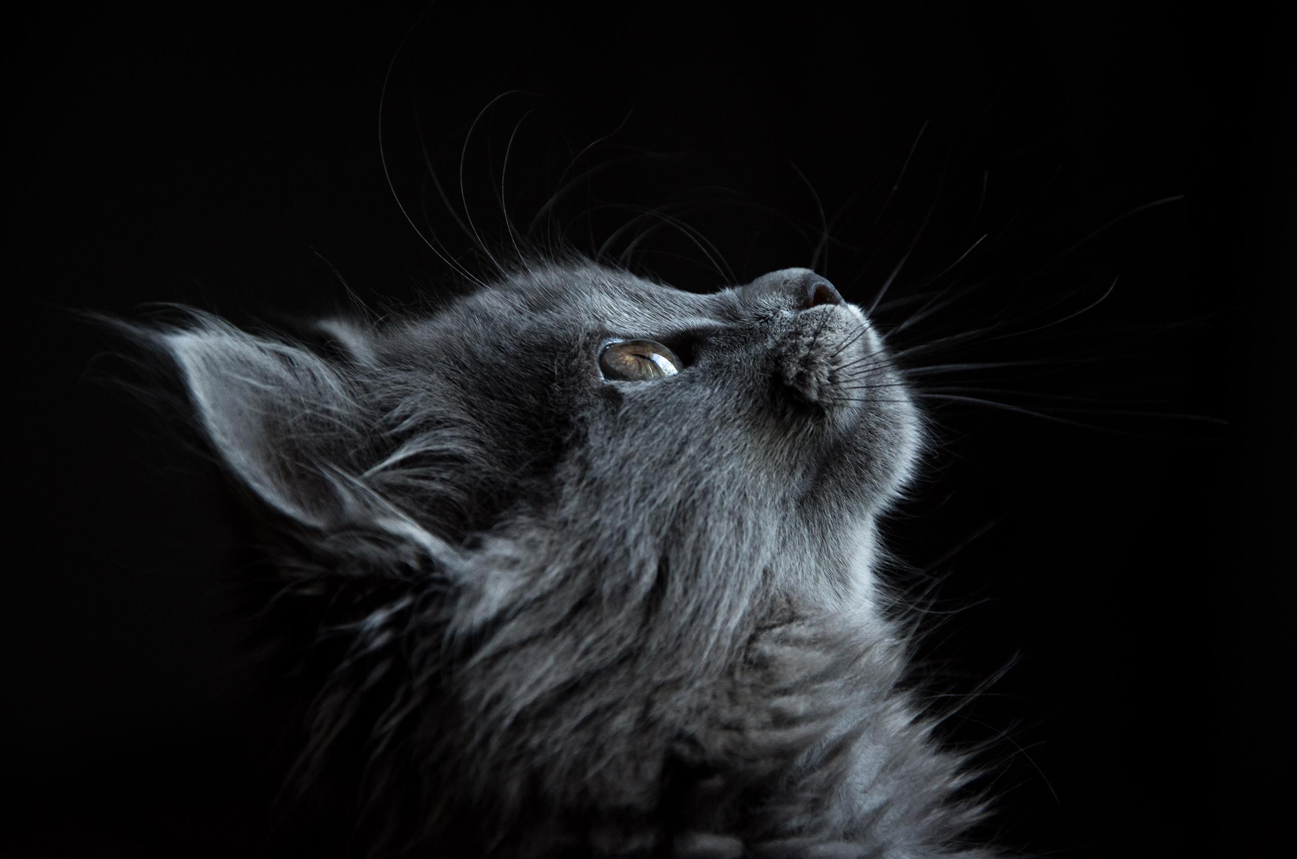adorable-animal-cat-730896